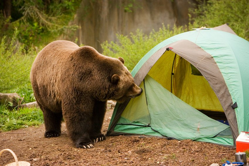 How to Keep Bears from Eating Your Business