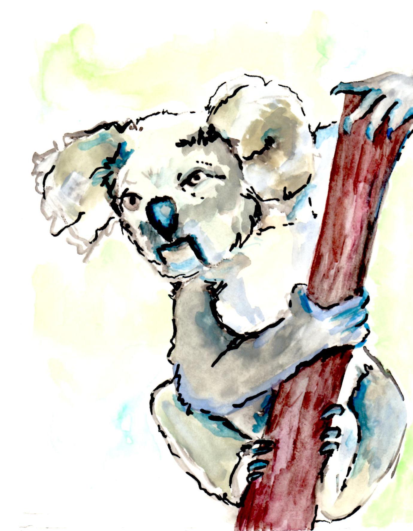 Koala you serious?