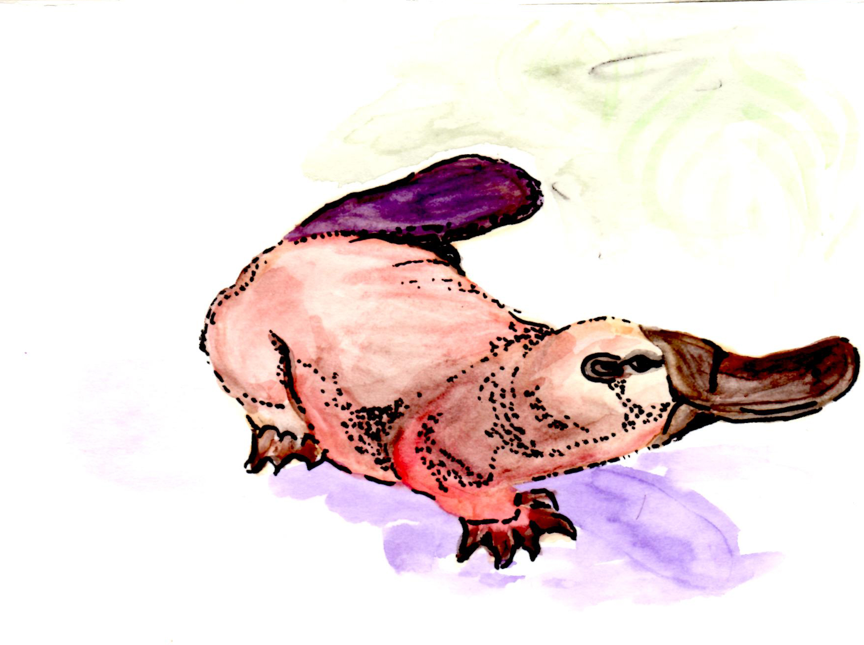 Platypussy