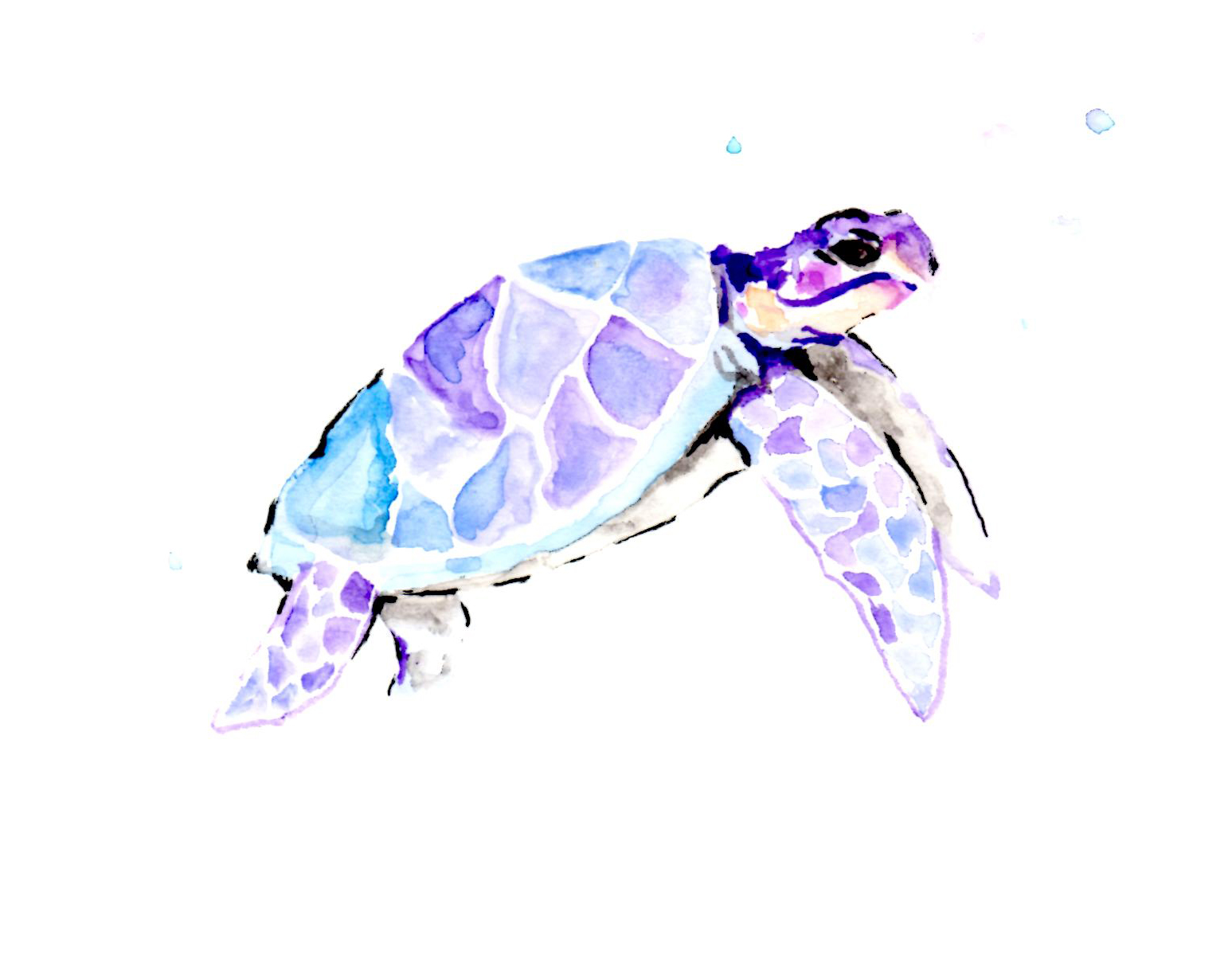 Seafaring Turtle